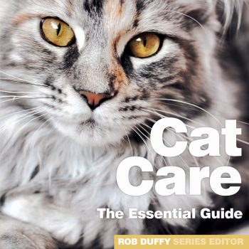 The Essential Guide To Cat Care