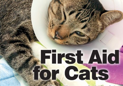 First Aid For Cats The Essential Guide