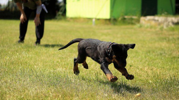 Dog Training: Bringing Your Outdoor Dog Inside