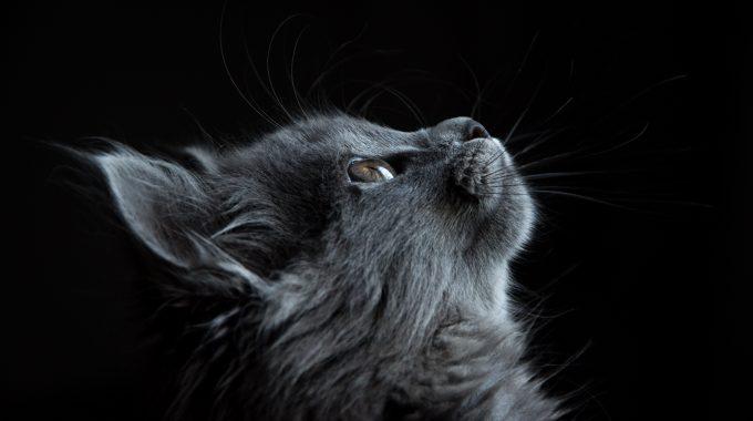 Adorable Animal Cat 730896