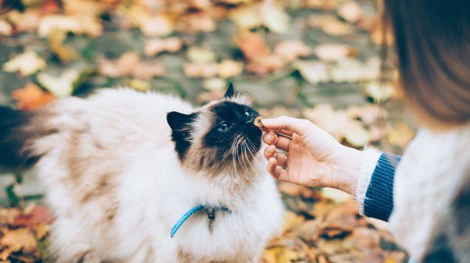 Cat Care: Indoor Or Outdoor?