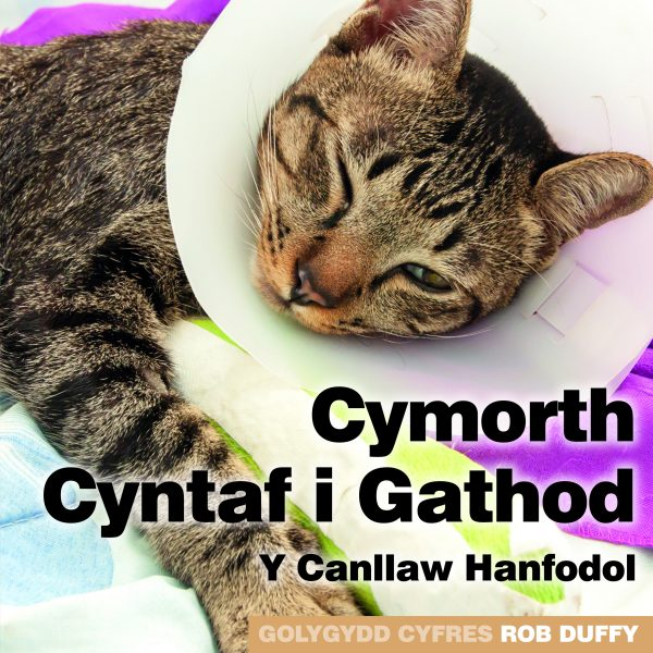 C1_First Aid for Cats – The Essential Guide_WELSH_COVER