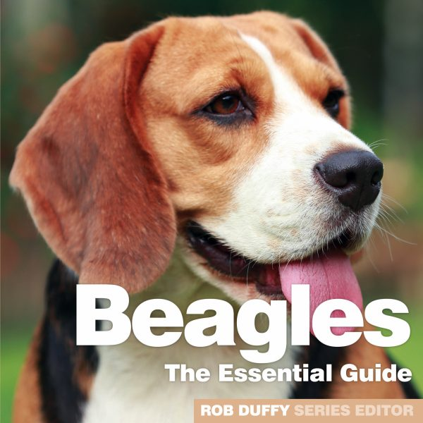 D12_Beagles – The Essential Guide