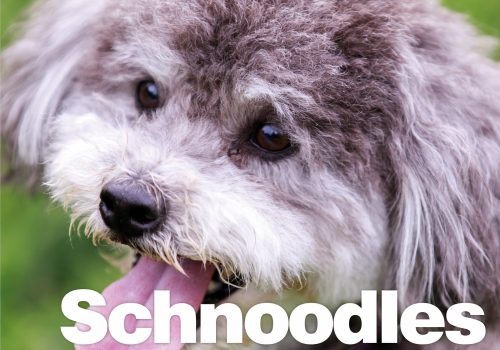 Schnoodles The Essential Guide