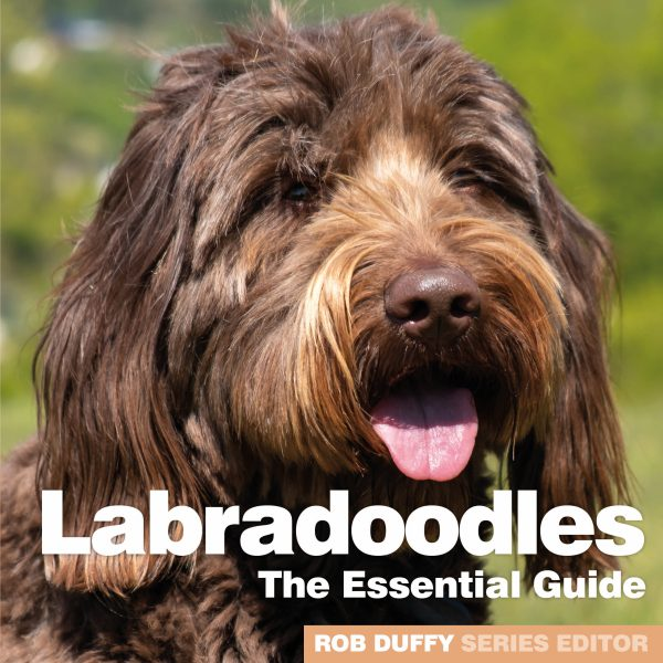 D14_Labradoodles – The Essential Guide