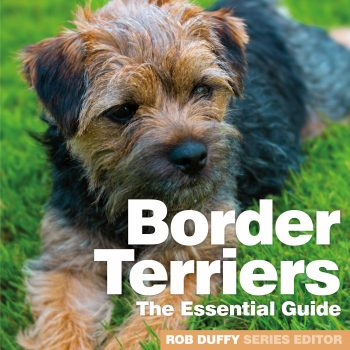 Border Terriers The Essential Guide