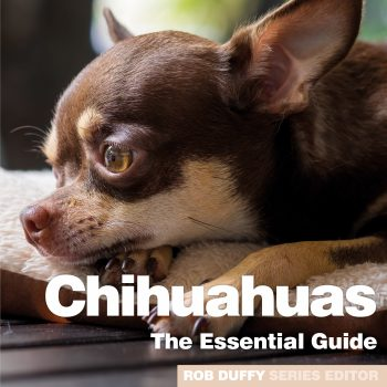 Chihuhuas The Essential Guide