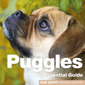Puggles The Essential Guide