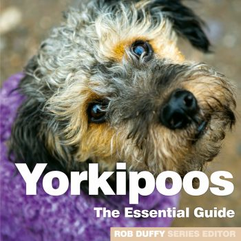 Yorkipoos The Essential Guide