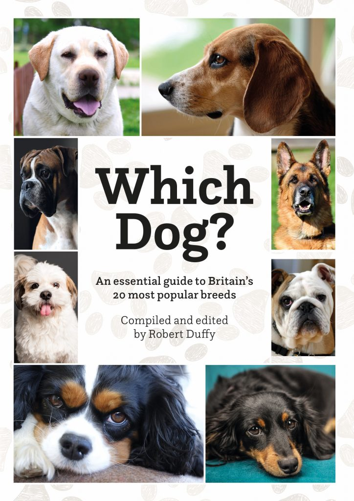 Covid Encourages Dog Ownership to Soar but 'Which dog' is for You?