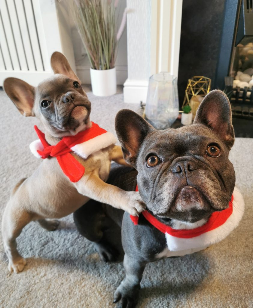 Enter Perfect-Pets' Animal Antics Poetry Competition and win £100