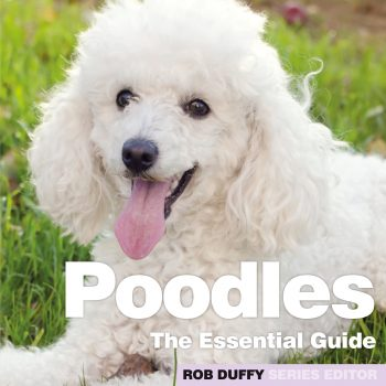 Poodles The Essential Guide