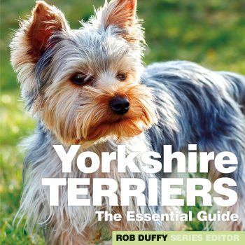 Yorkshire Terriers The Essential Guide