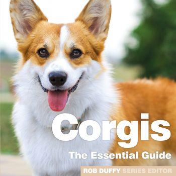 Corgis The Essential Guide