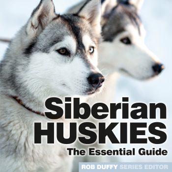 Siberian Husky The Essential Guide